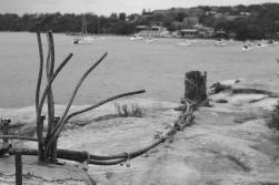 Balmoral Shark Net Remnants